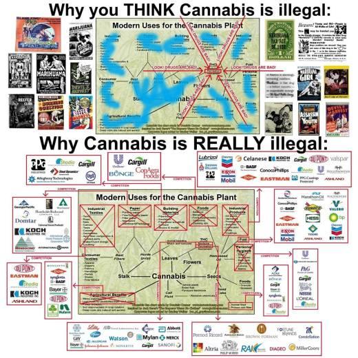 Why Marijuana is REALLY illegal